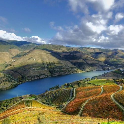 Wine & Olive Oil (Douro) - CLEVERTOURS